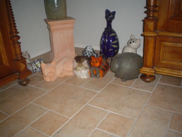 Flöckchen in der Katzengruppe