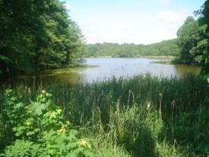 ein See in der Schorfheide